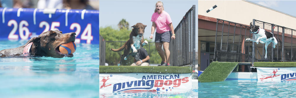 Diving Dogs